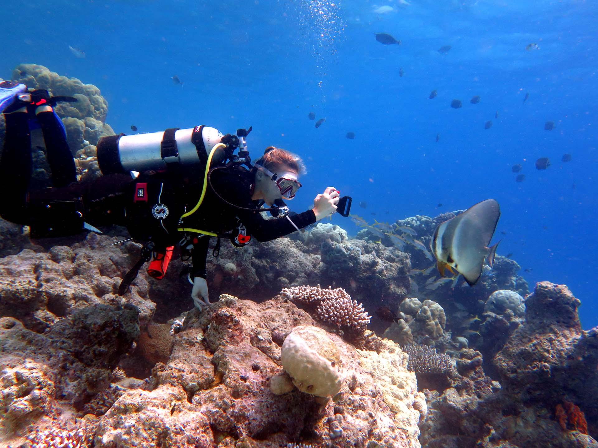 Seamarc Maldives Volunteering - wonderful natural coral reef