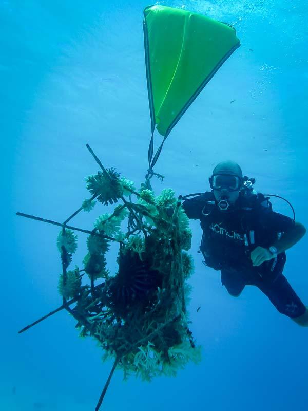 Seamarc Maldives Volunteering - Emily's blog