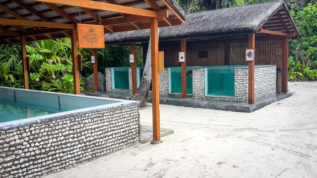 Seamarc Maldives Volunteers Nicole's Blog