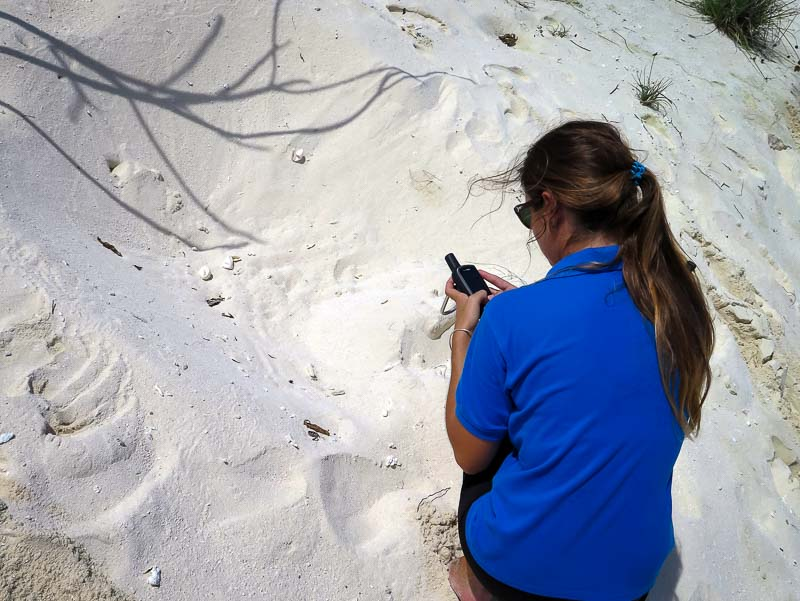 Turtle nests - Logging GPS position, Marine Savers Maldives