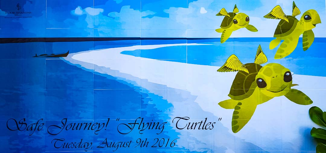 Flying Turtles Banner