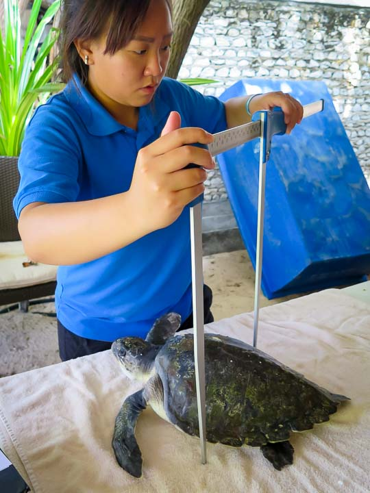 Captain - admission - sea turtle conservation Maldives Marine Savers