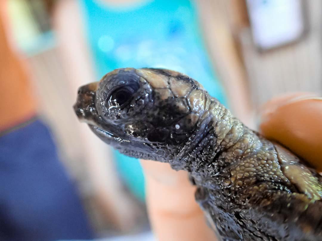 EI.034 Lilyana (2) sea turtle conservation Maldives Marine Savers