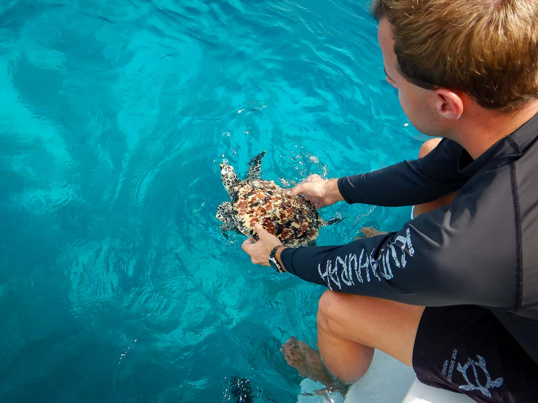George - hawksbill turtle hatchling release Marine Savers Maldives (4)