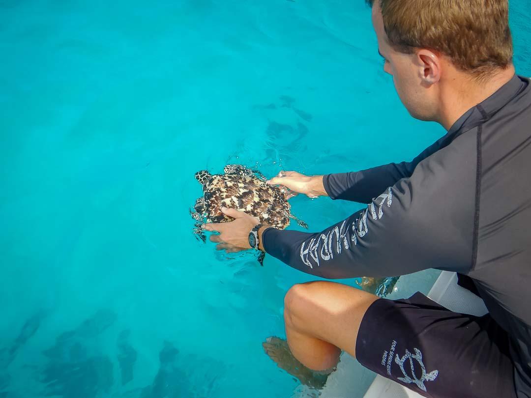 Homer - hawksbill turtle hatchling release Marine Savers Maldives (1)