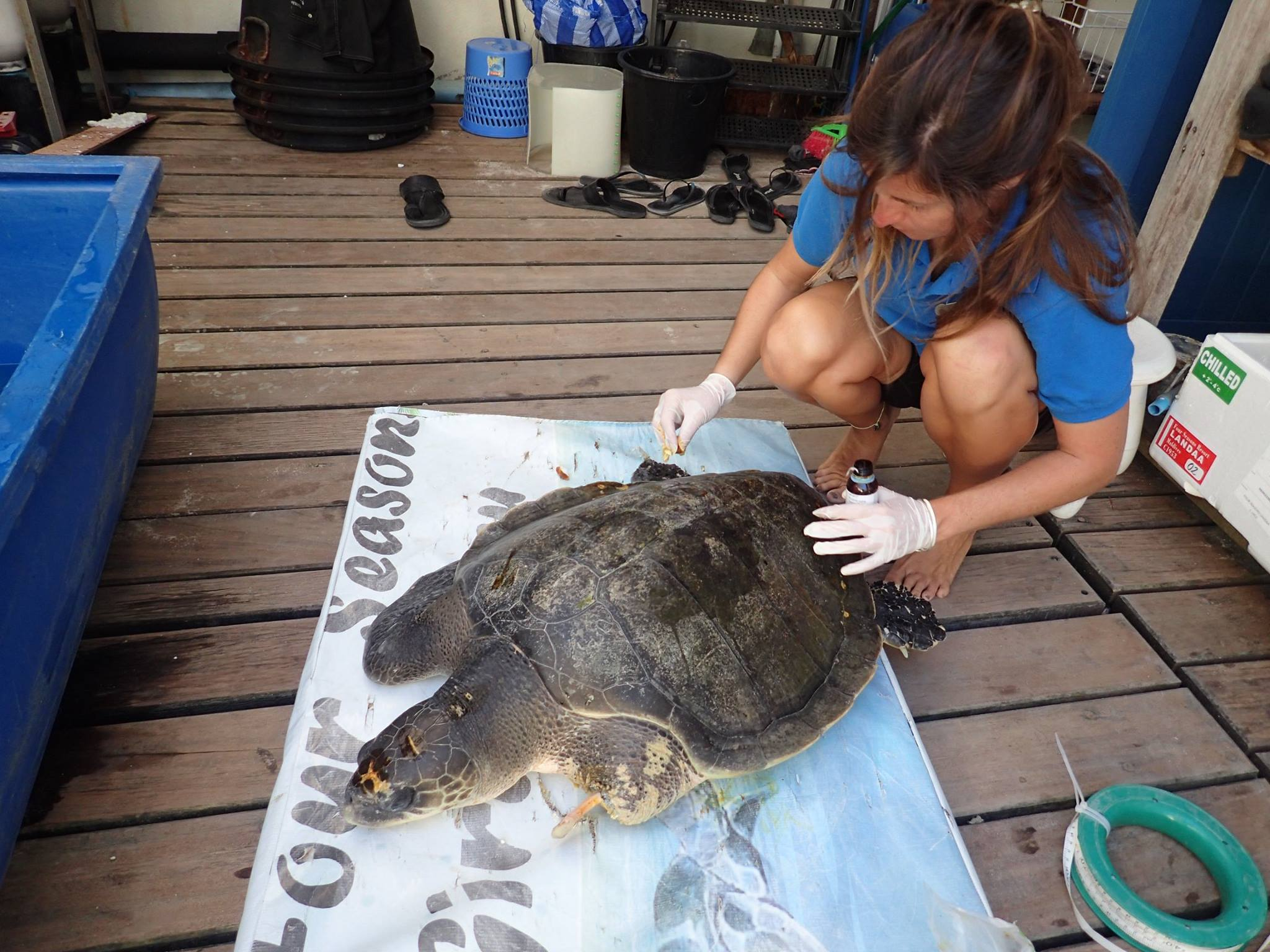 Denise - Olive Ridley turtles rescued from ghost nets, Marine Savers Maldives