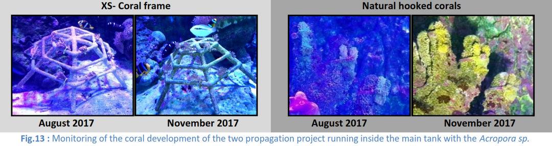 Aquarium coral propagation - Marine Savers Maldives