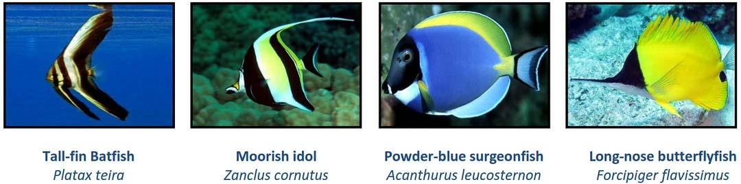 Aquarium - new fish Marine Savers Maldives