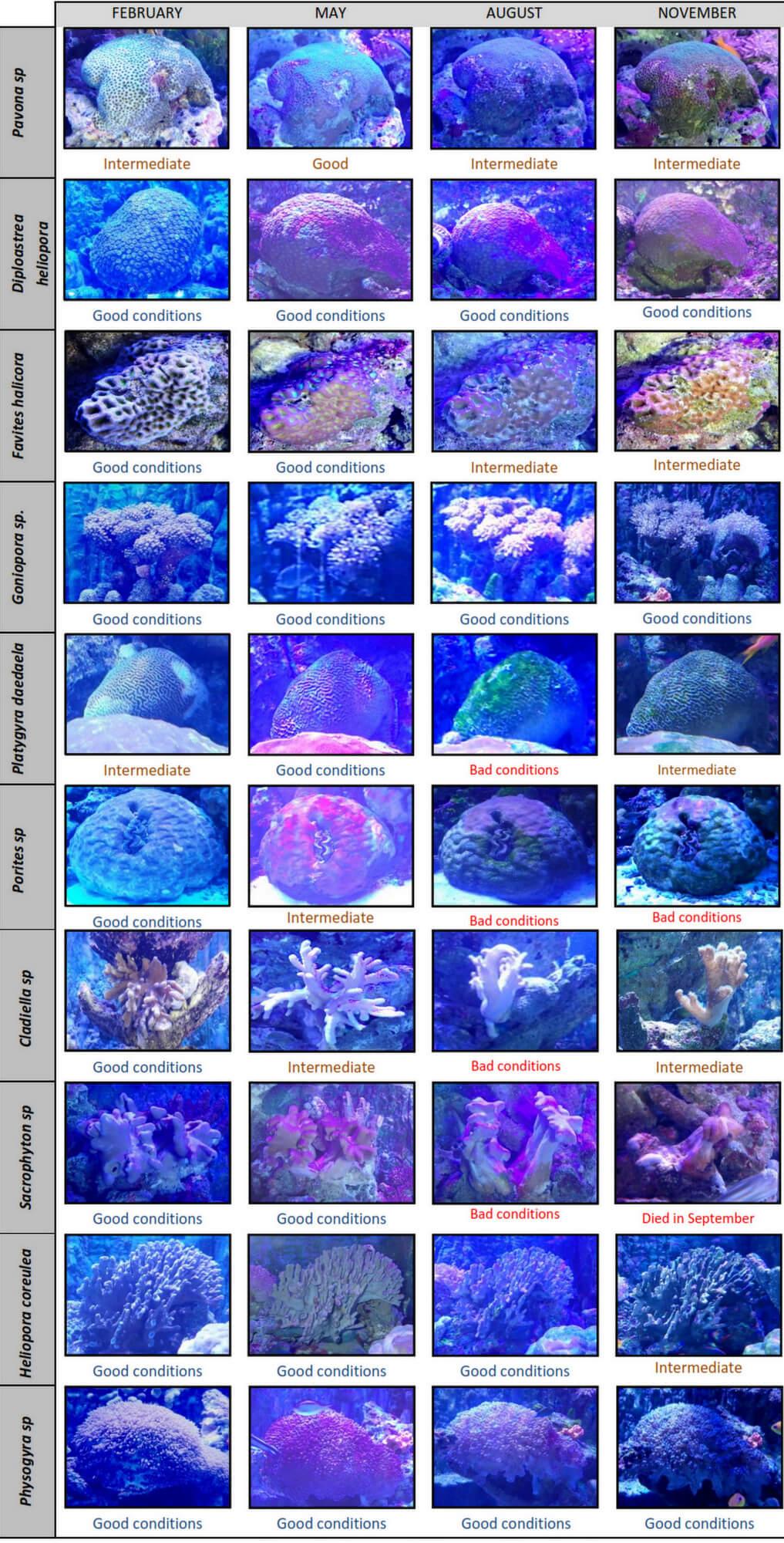 Fish Lab - Main Aquarium - corals 2017
