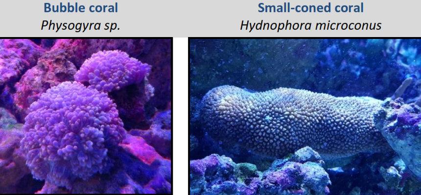 Fish Lab new corals [LG 2017-10]