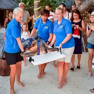 Kainalu release - Seamarc Maldives marine biologist internship