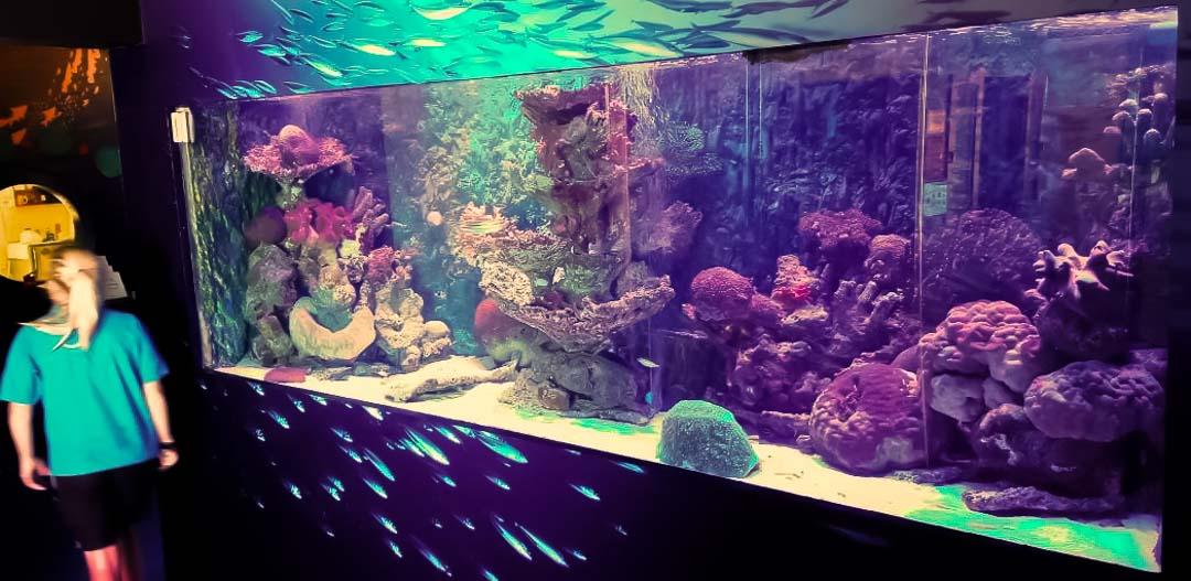 Marine Discovery Centre, marine aquarium, Landaa Giraavaru, Maldives