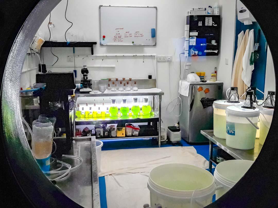 Marine Savers - Fish Lab