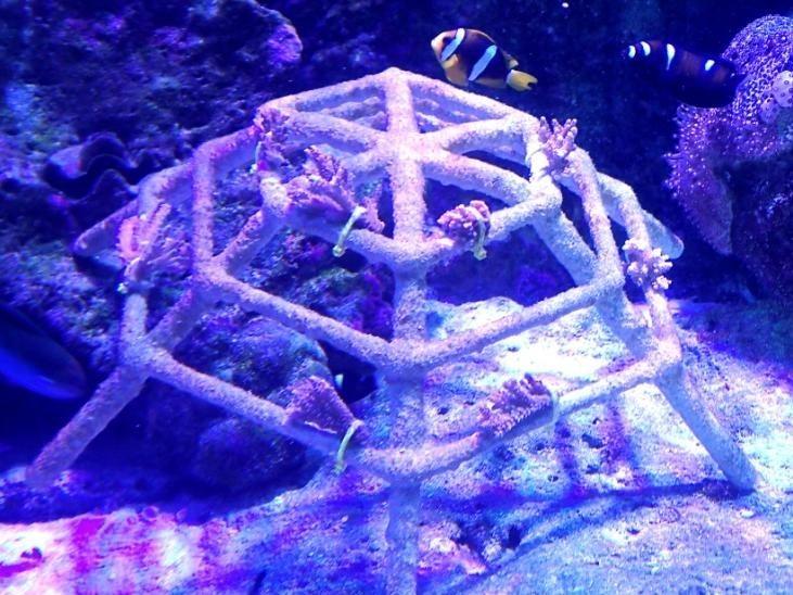 Mini coral frame in aquarium – Marine Savers Maldives [LG 2017.08]