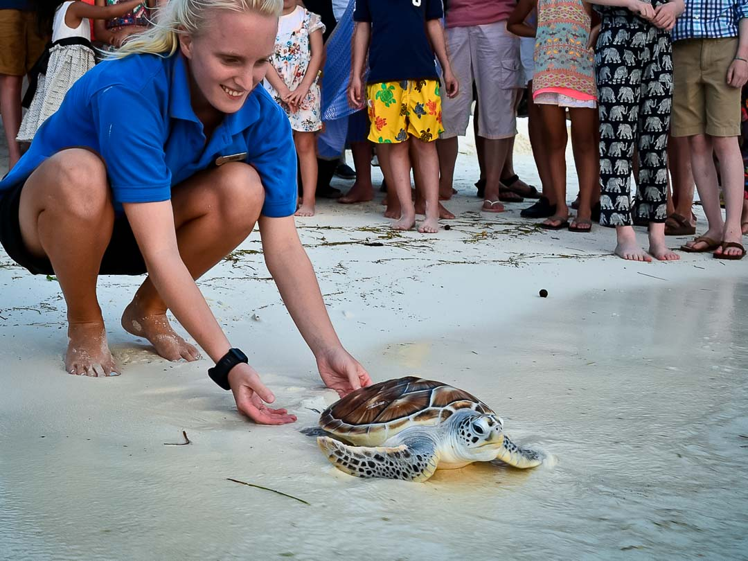 Bodhi - Marine Savers Maldives - turtle conservation