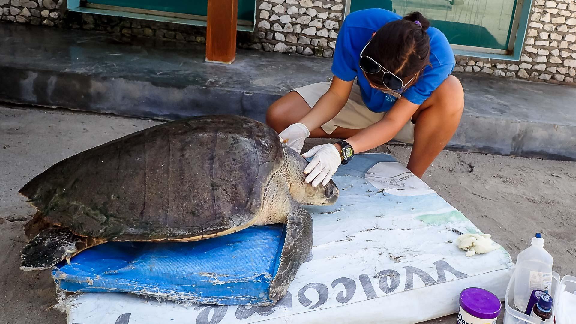 Lynn Internship Marine Savers Maldives Jan