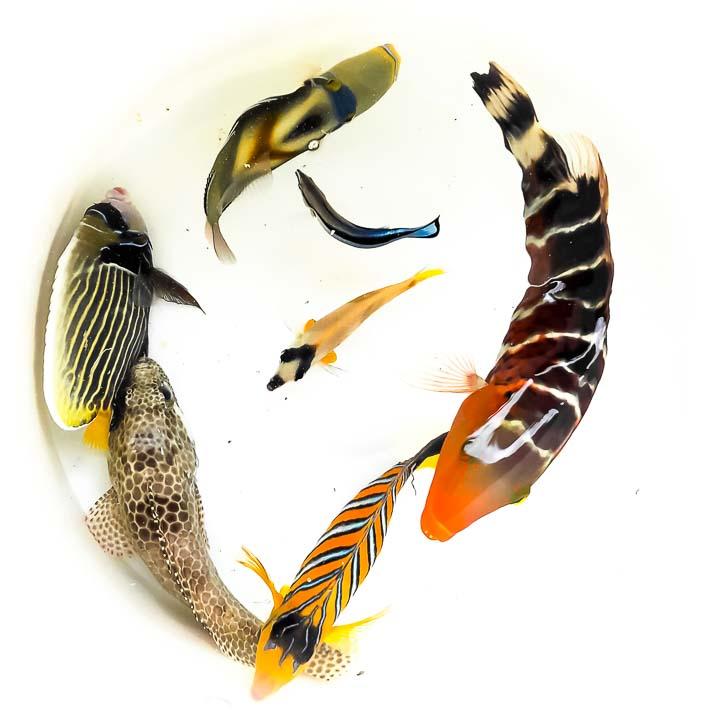 Marine aquarium renovation – fish samples – Marine Savers Maldives
