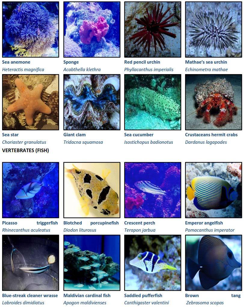 Marine aquarium renovation - anemone and fish - Marine Savers Maldives