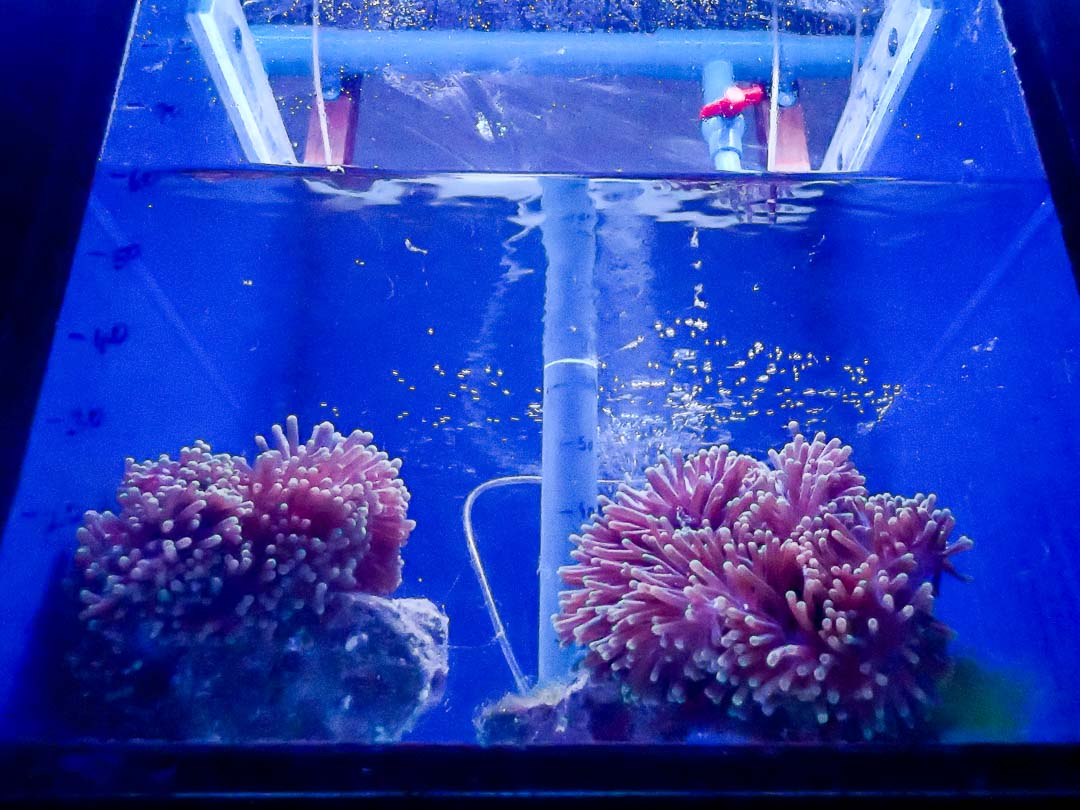 Fish Lab anemone tanks Marine Savers Maldives
