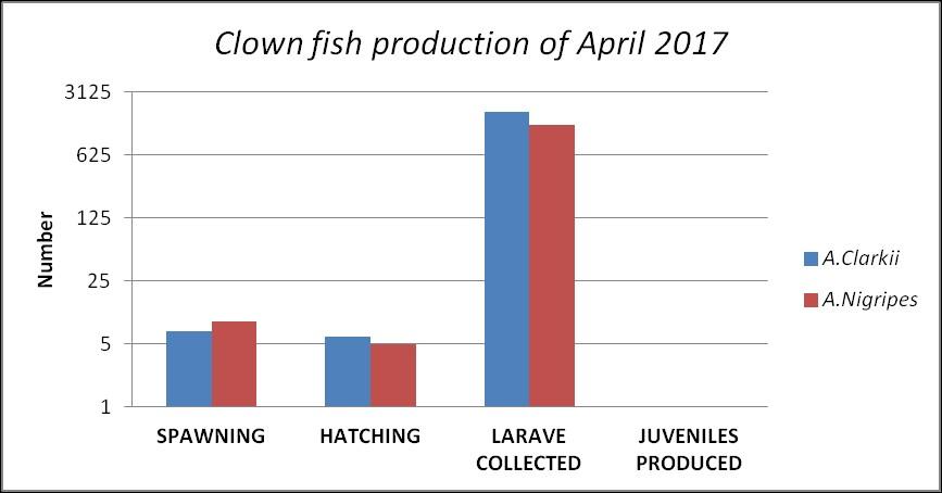 Marine Savers Fish Lab - Clownfish breeding
