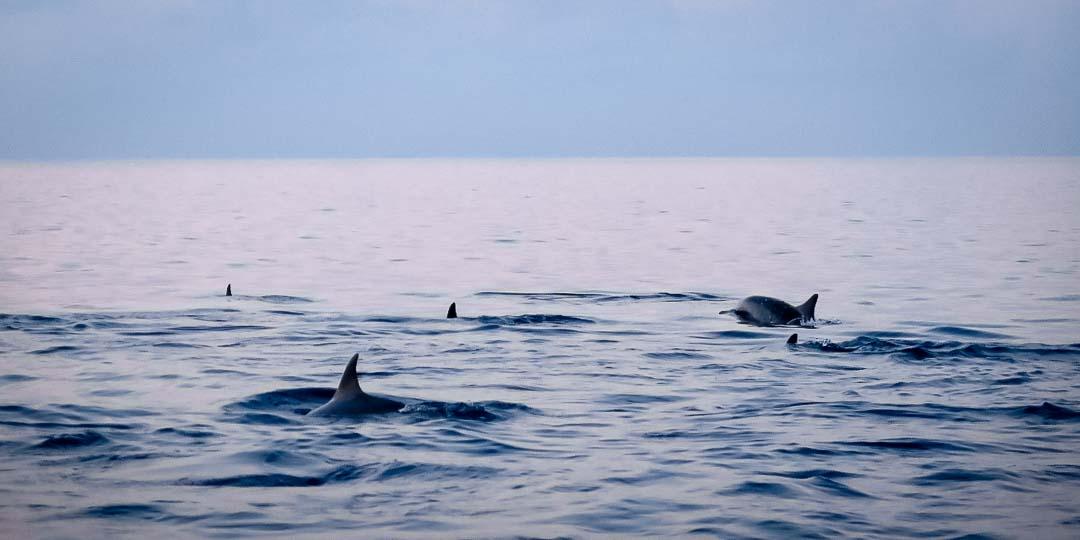 Irene's internship - dolphin cruise - Marine Savers Maldives