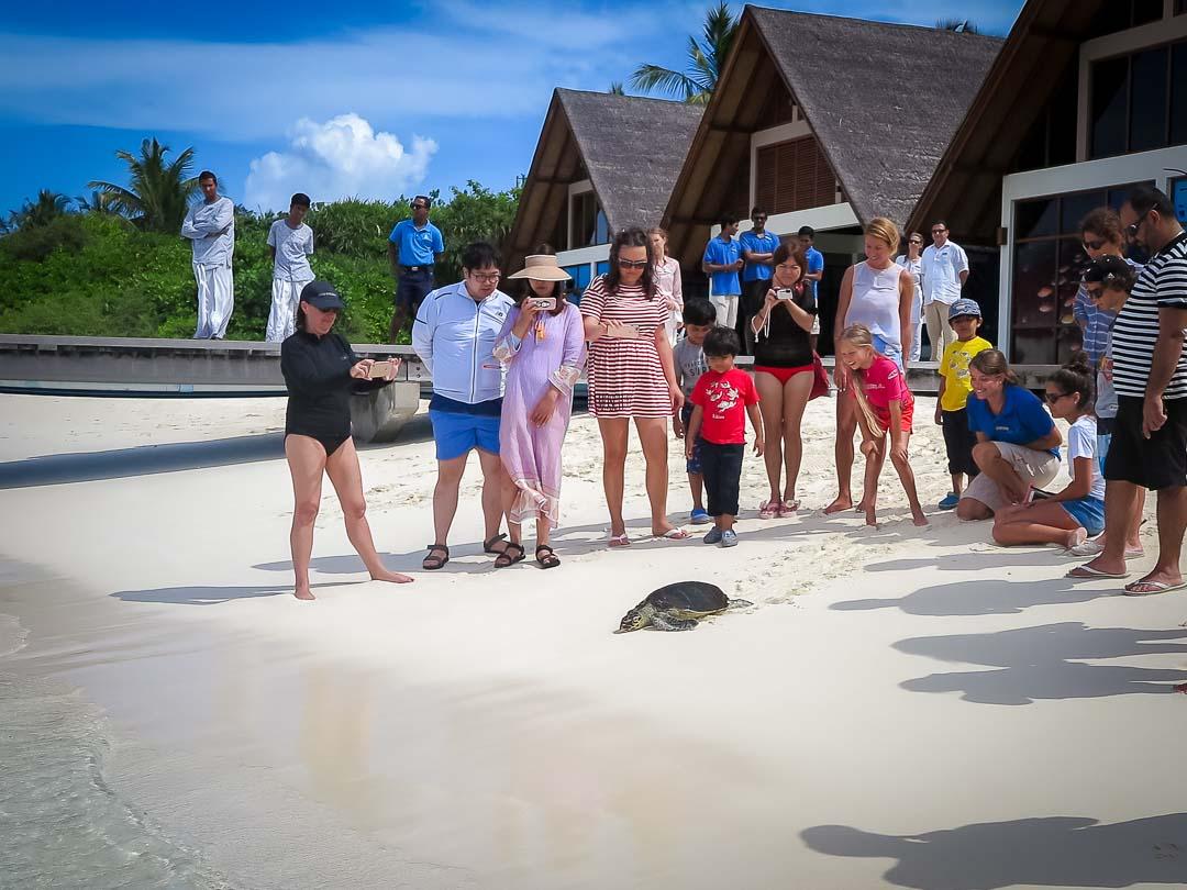 Johanna - Rescue Hawksbill turtle - Marine Savers Maldives