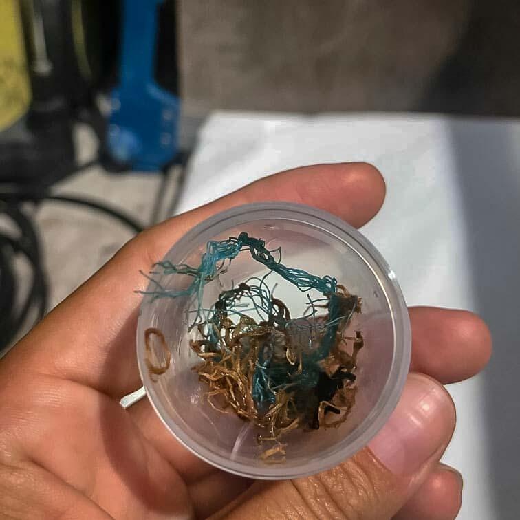 Indra - plastic debris in faeces