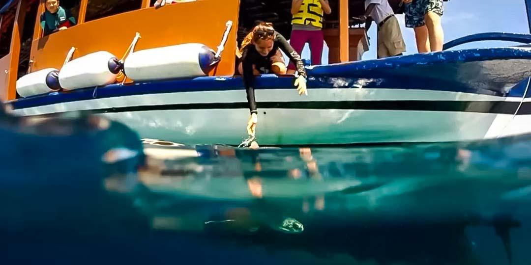 Irene internship - Max release - Marine Savers Maldives