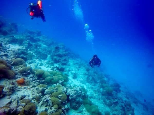 Irene's Internship – Marine Savers Maldives – diving