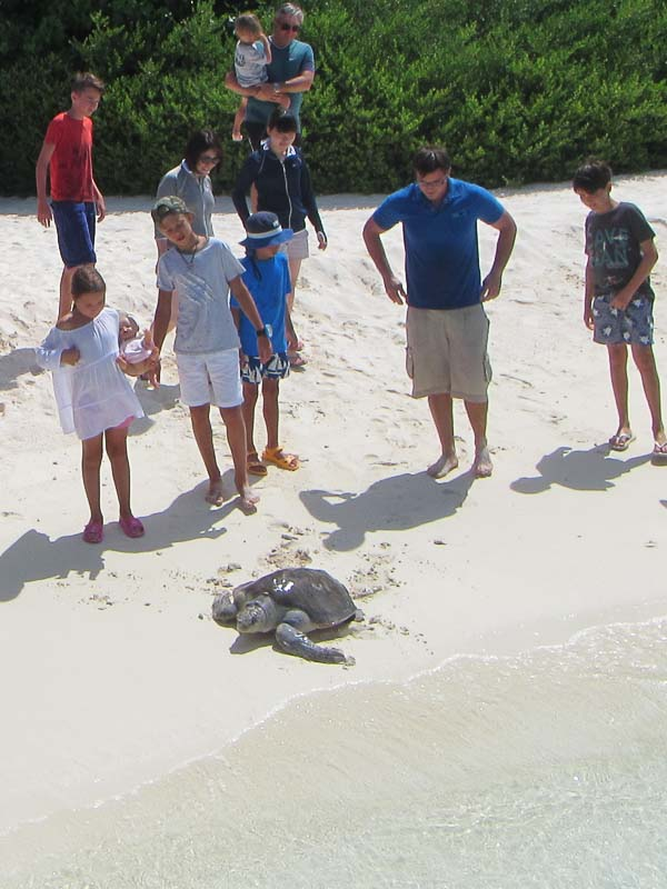 Molly rescue Olive Ridley turtle Marine Savers Maldives - release