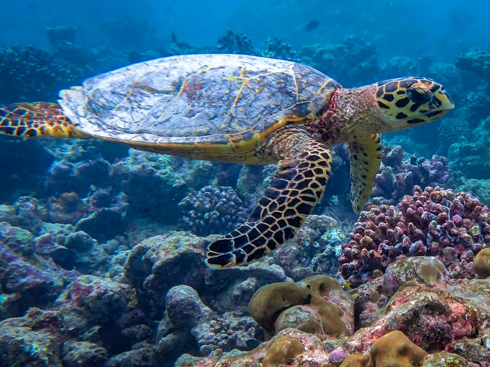Vanessa's Marine Biology Internship