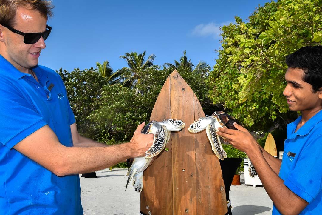 Leo and Olaf (1) sea turtle centre Marine Savers Maldives