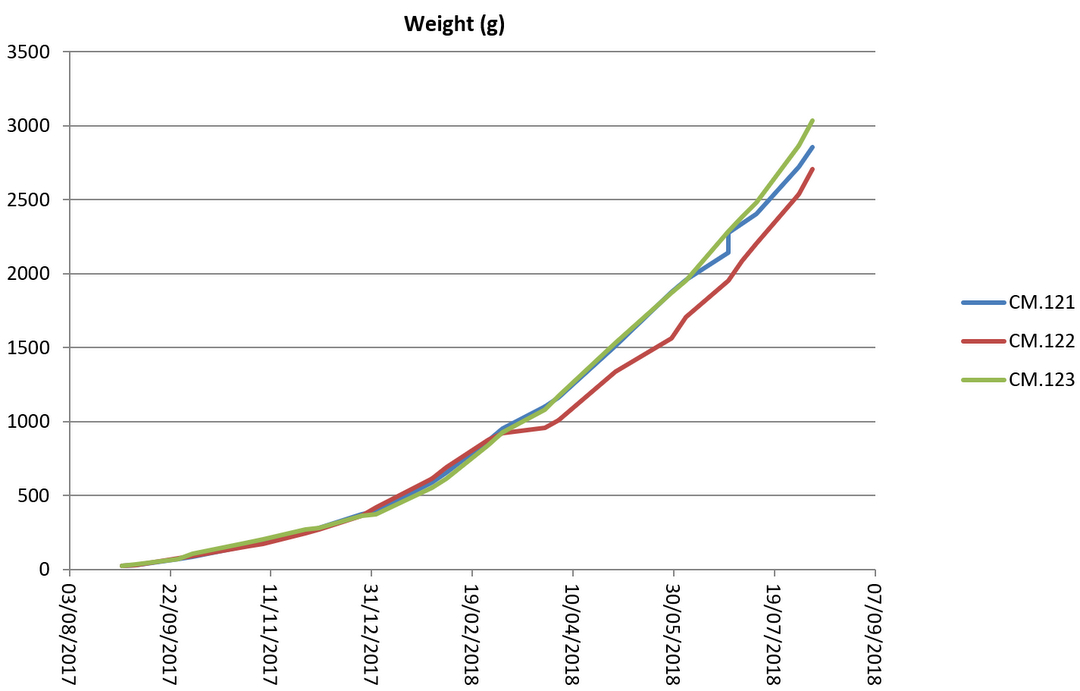 Turtle weight graph August 2018