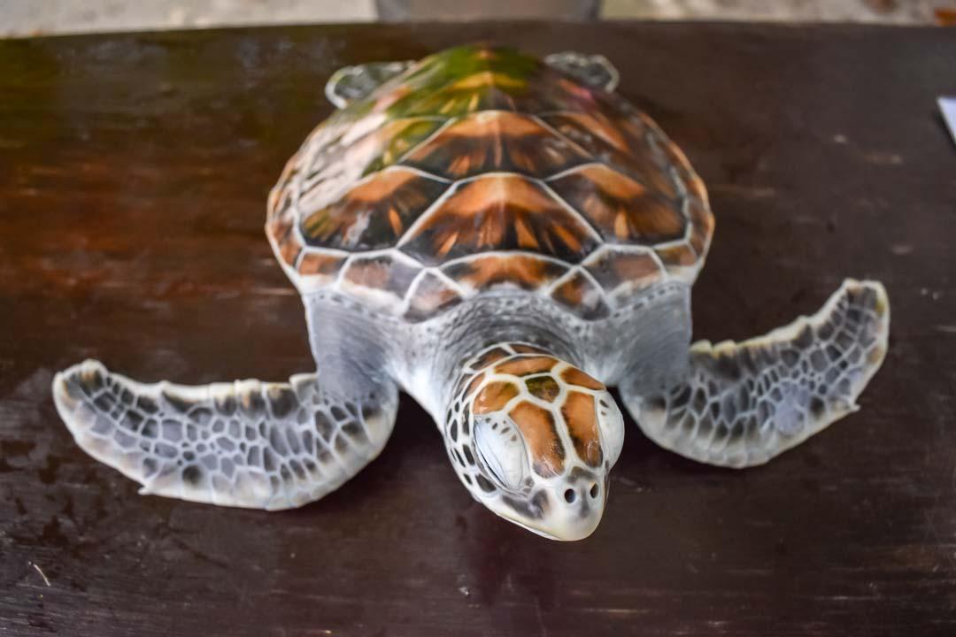 Deeko sea turtle centre Marine Savers Maldives