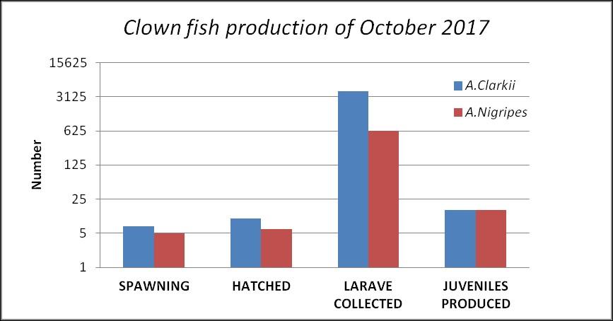 Fish Lab – clownfish breeding Oct 17 [LG 2017.10]