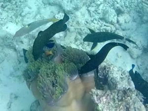 Fish Lab – grouper predation on wild anemone (Marine Life from Lab to Ocean)