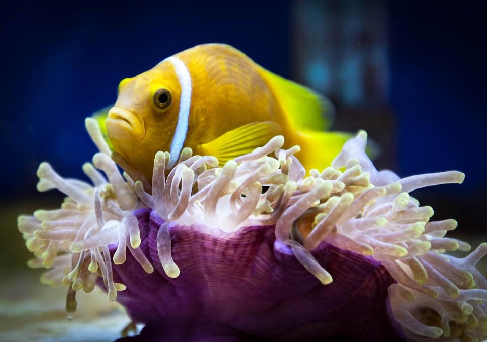 Jean-Gabriel's Clownfish Tales