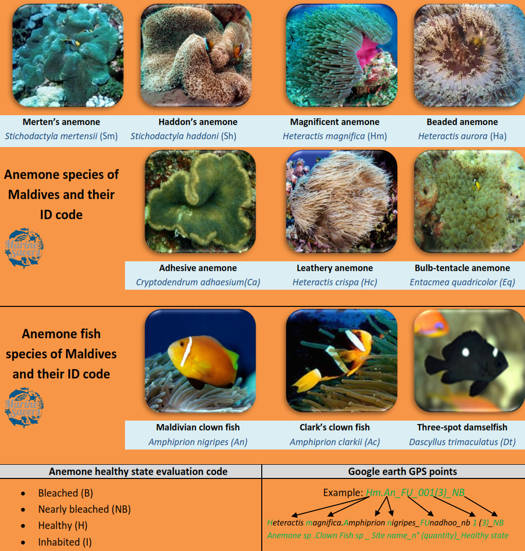 Fish Lab - anemone ID monitoring guide Marine Savers Maldives