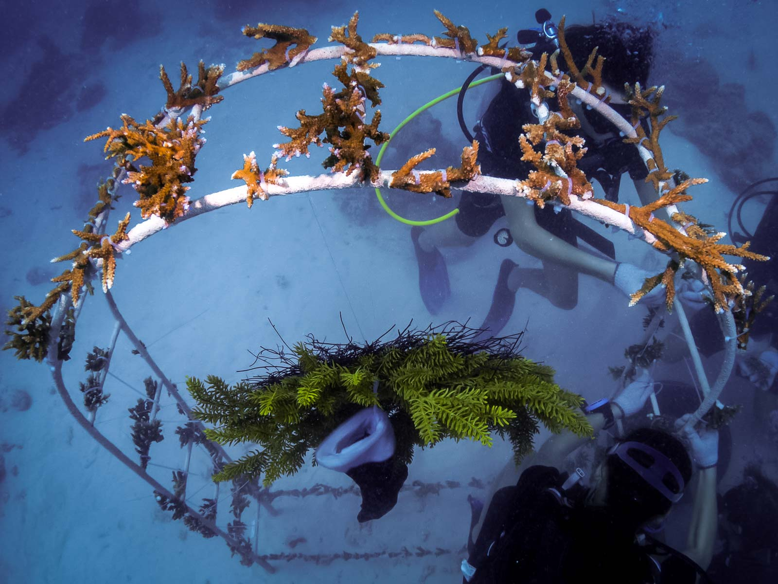 Reefscapers – coral arch Marine Savers Maldives (1)