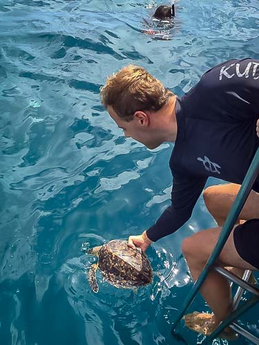 Rescue Hawksbill turtle Renee release Marine Savers Maldives (3)