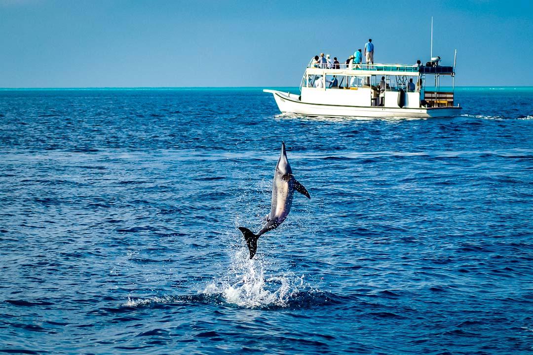 Dolphin Safari - Kuda Huraa Maldives (3)