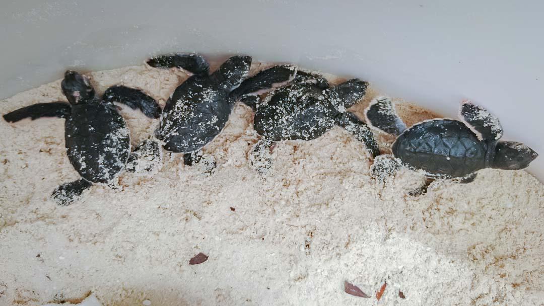 Tiana's Marine Biology internship, Maldives (1)