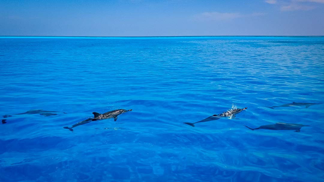 Tiana's Marine Biology internship, Maldives (2)