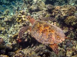 Tiana's Marine Biology internship, Maldives (3) (Tiana's Tales)