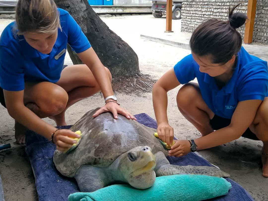 Tiana's Marine Biology internship, Maldives (4)