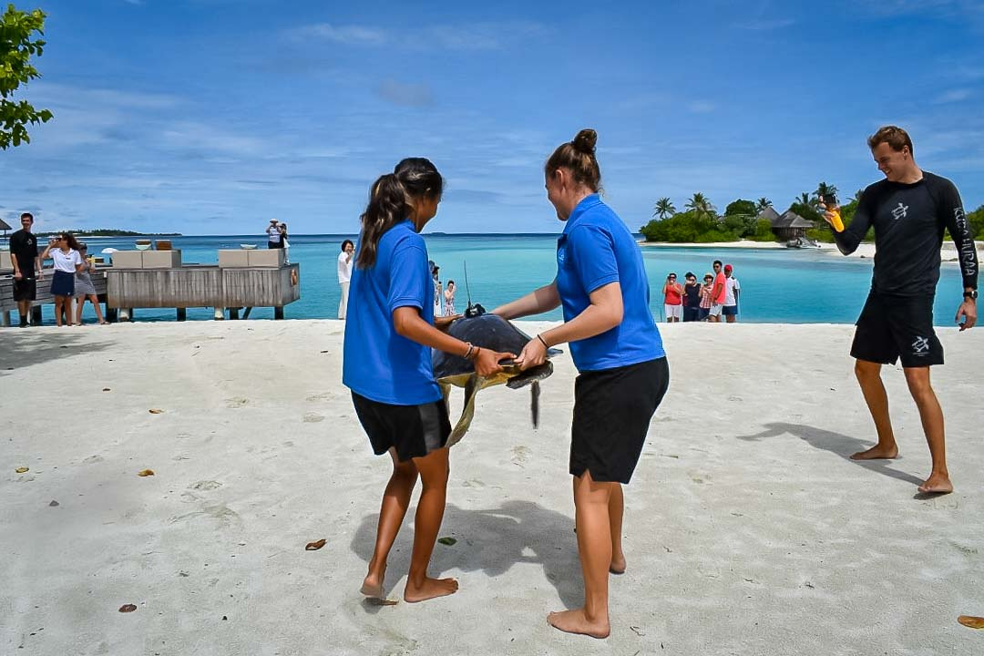 Tori's internship, Marine Savers Maldives (4)
