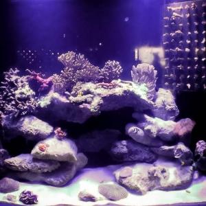 Aquarium 2 Marine Savers Maldives (Updates from Landaa and Kuda Huraa)