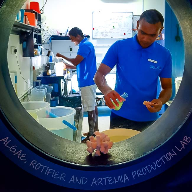 Fishlab - apprentices Marine Savers Maldives