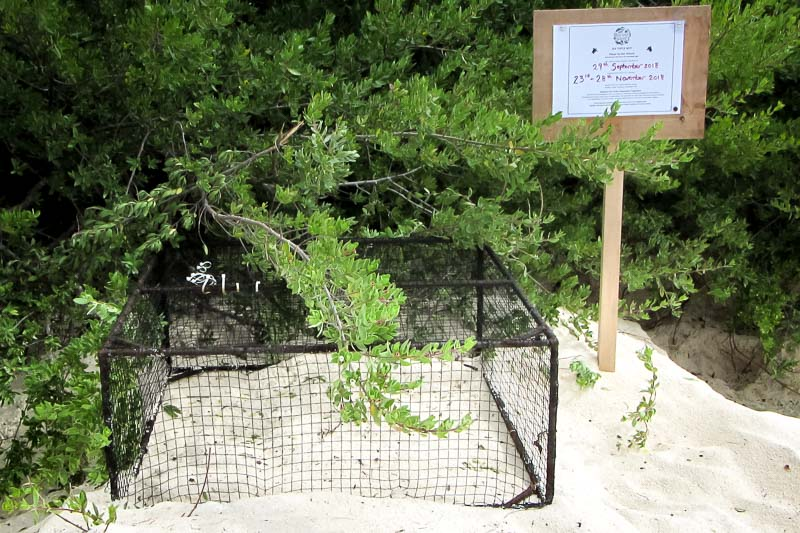 Turtle-Nest-2 (laid 29 Sept, V210) Landaa Giraavaru Maldives (2)
