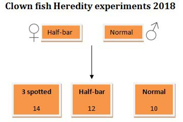 Clownfish heredity experiment